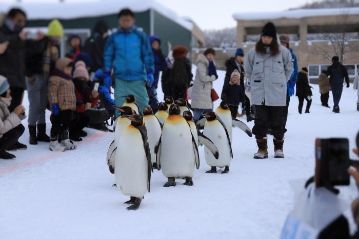 【旭山動物園/ペンギンのお散歩】北海道旅行 - 3 -_f0348831_22504923.jpg
