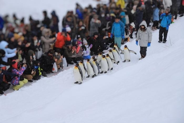 【旭山動物園/ペンギンのお散歩】北海道旅行 - 3 -_f0348831_22505273.jpg