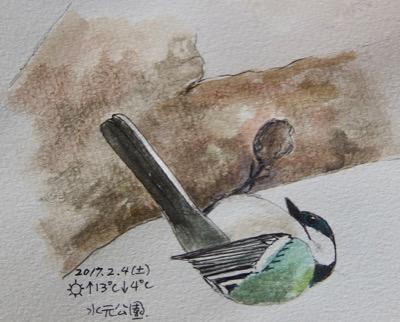 #野鳥スケッチ #ネイチャー・ジャーナル 『四十雀』 Japanese tit_a0083553_8191212.jpg