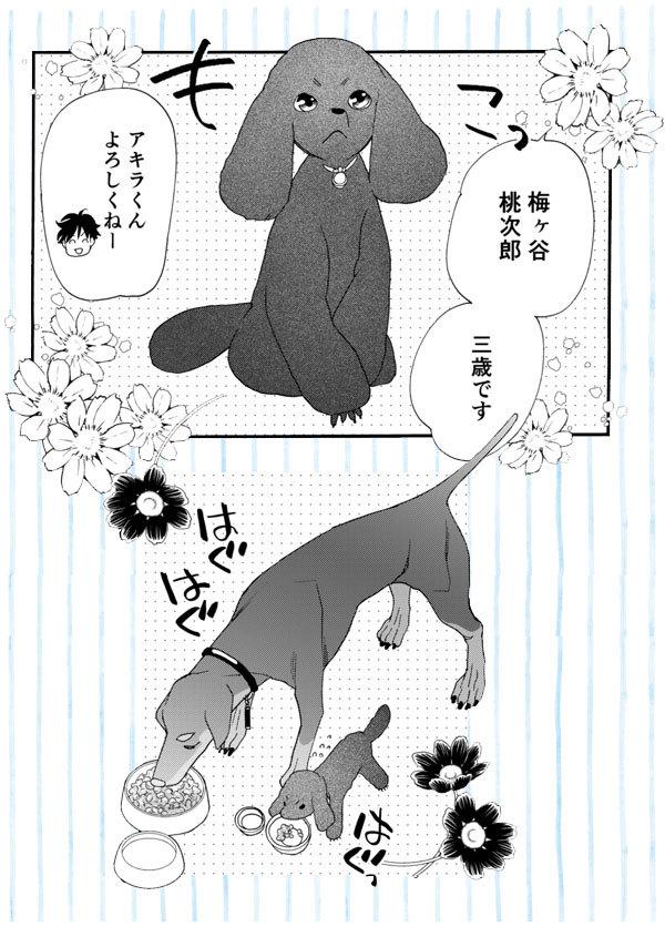 「花ゆめAi Vol.5」と「恋するMOON DOG #5」本日公開です_a0342172_19010691.jpg