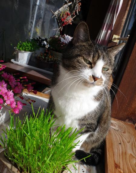 晴れた日の猫部屋と、大ハウス(大文字草の置き場)の様子♪_a0136293_14392319.jpg