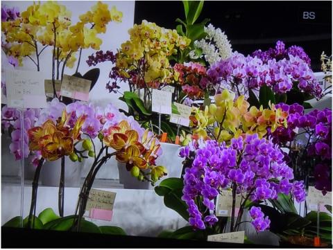 世界らん展2019~花と緑の祭典~BSプレミアム再放送…2019/2/19_f0231709_15452552.png