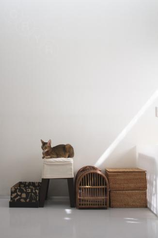 [猫的]タテ_e0090124_22232055.jpg