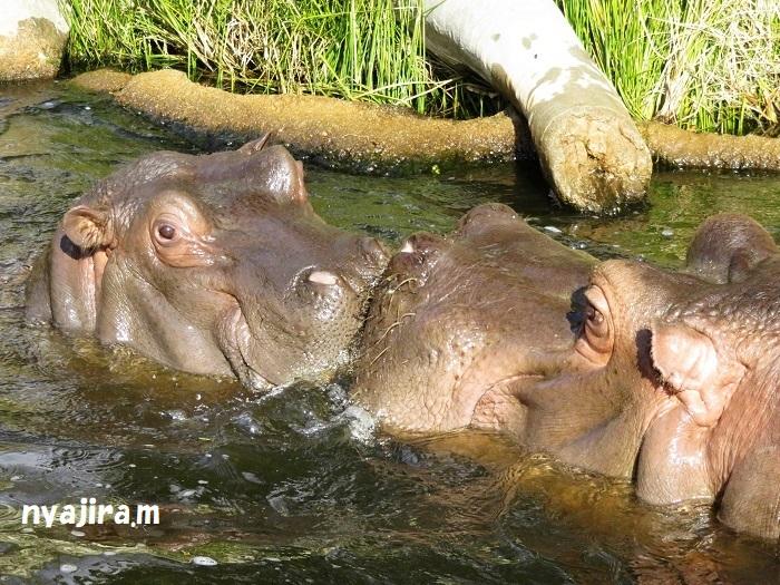 2月10日に王子動物園へ_f0002743_01132180.jpg