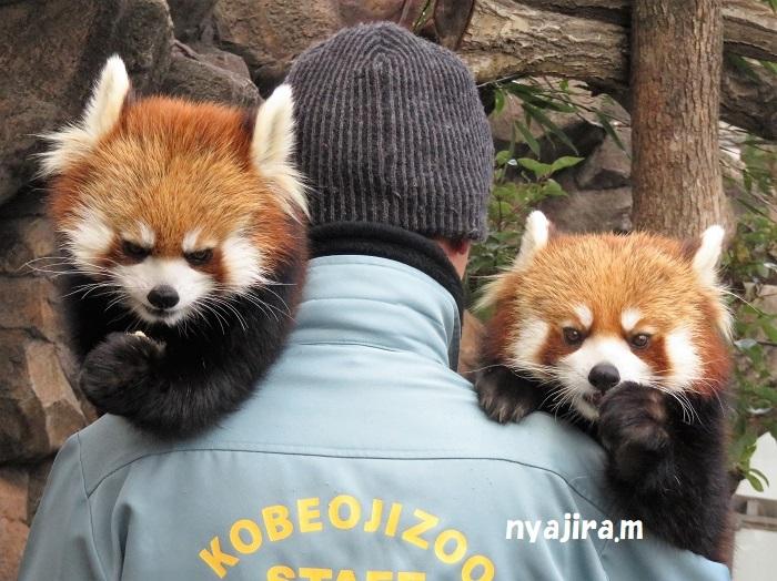 2月10日-2 王子動物園_f0002743_01170852.jpg