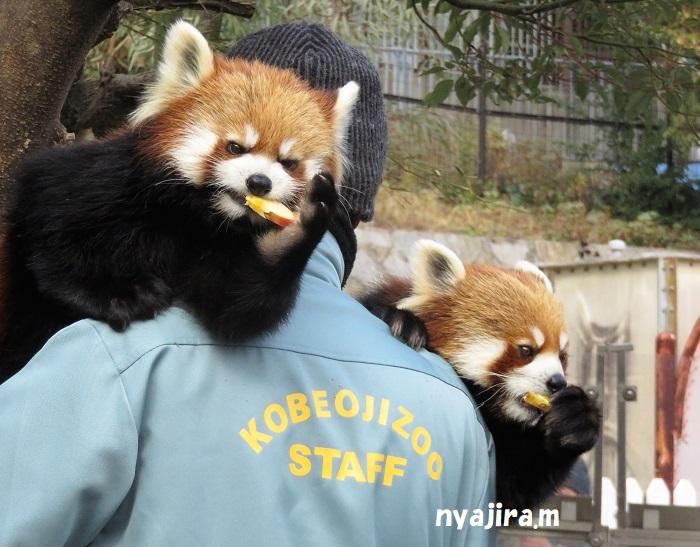 2月10日-2 王子動物園_f0002743_0553193.jpg