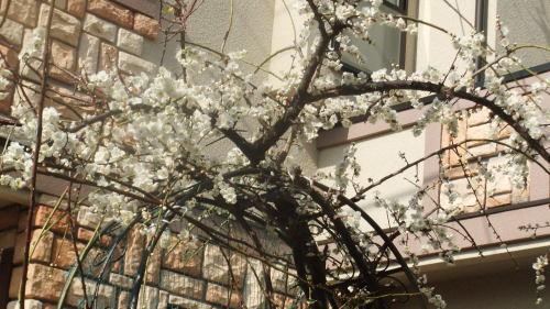 安川寿之輔さんの千葉県松戸市での講演の案内_f0253572_14272369.jpg