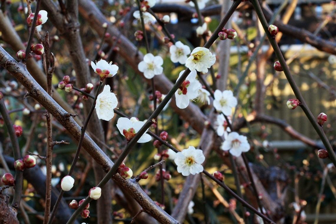 花咲く素晴らしき日々_a0107574_18060592.jpg