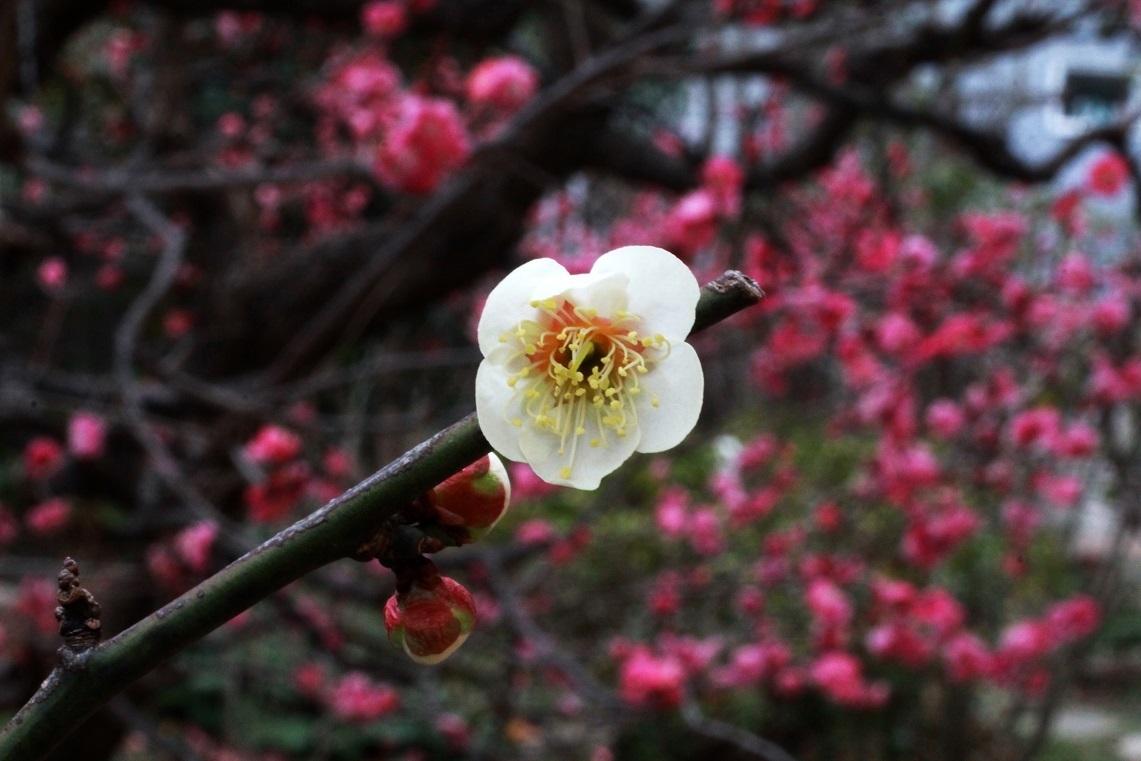 花咲く素晴らしき日々_a0107574_18061470.jpg