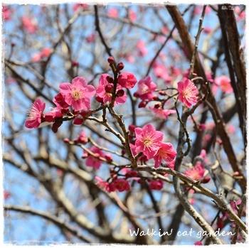 暖かな日差し_c0322789_14013017.jpg
