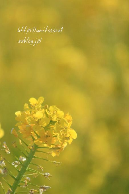 春の足音_b0324291_21403838.jpg