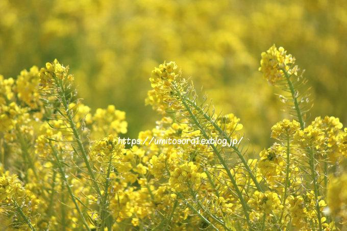 春の足音_b0324291_21403908.jpg