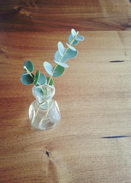 植物のチカラを借りて感染症予防~ユーカリ~_e0270098_11385962.jpg
