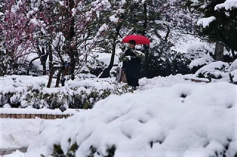 雪の中の赤い傘(思い出)_b0230131_07205454.jpg