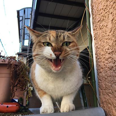 最近の外猫事情_a0028451_13433844.jpg