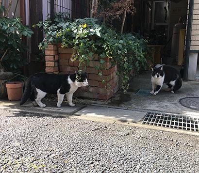 最近の外猫事情_a0028451_13452096.jpg