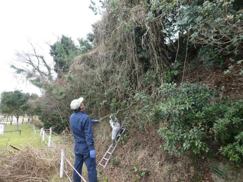 ぼうけん山入口整理・・・うみべの森_c0108460_17390621.jpg