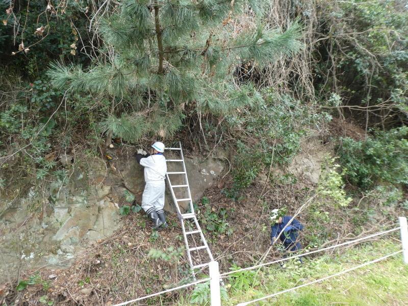 ぼうけん山入口整理・・・うみべの森_c0108460_17390707.jpg