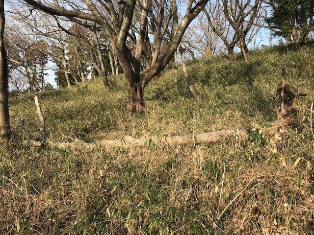ヤバイ!六国見山の同期の桜が倒木の下敷きに2・20_c0014967_07491977.jpg