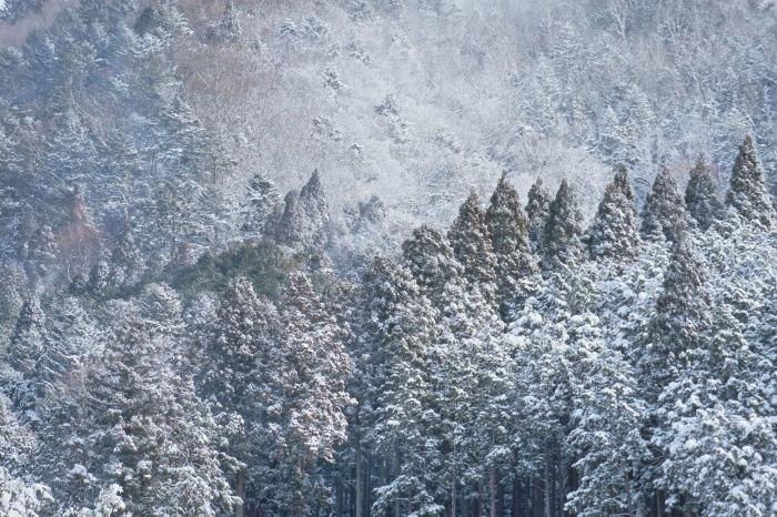 京都 大原雪景色 2019_f0021869_23570399.jpg