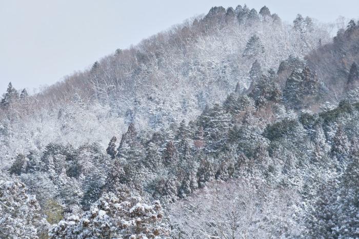 京都 大原雪景色 2019_f0021869_23570416.jpg