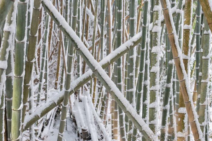 京都 大原雪景色 2019_f0021869_23570596.jpg
