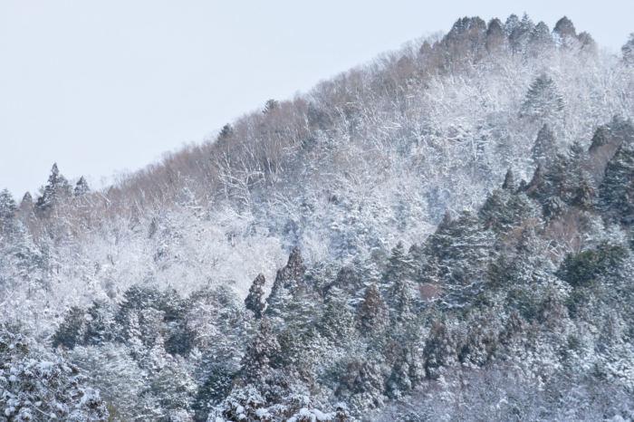 京都 大原雪景色 2019_f0021869_23570598.jpg