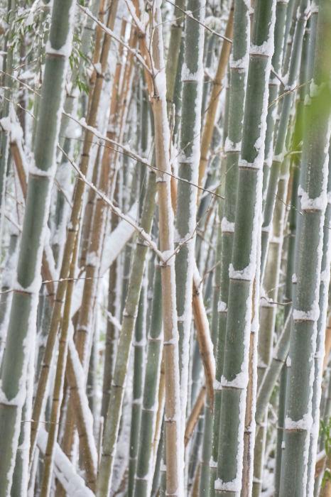 京都 大原雪景色 2019_f0021869_23570660.jpg