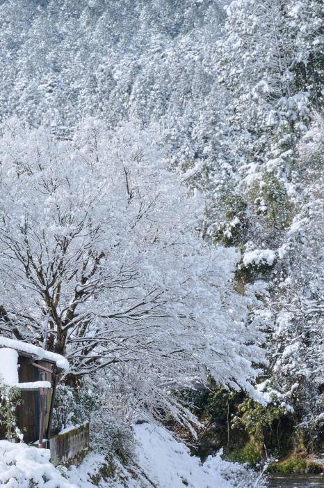 京都 大原雪景色 2019_f0021869_23570793.jpg
