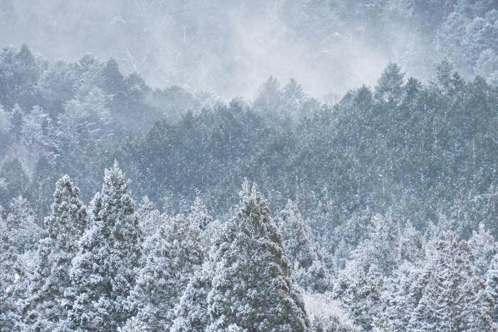 京都 大原雪景色 2019_f0021869_23570881.jpg