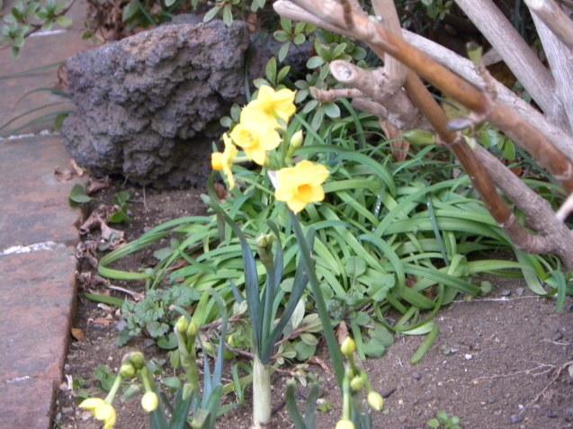 散歩で見た花・花_c0162773_13001679.jpg