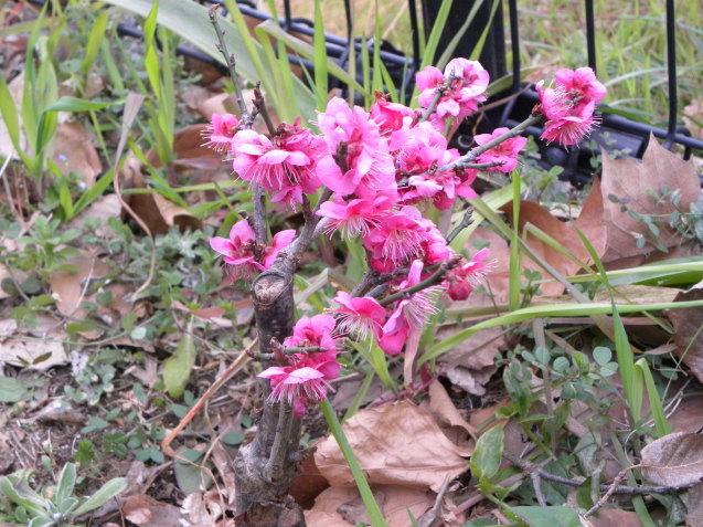 散歩で見た花・花_c0162773_13011935.jpg