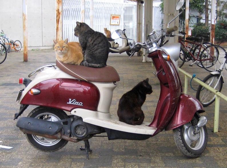 猫のベンチ_b0057679_09362482.jpg