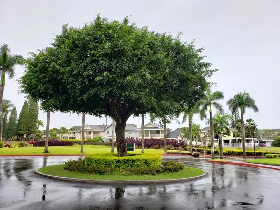 愛媛丸の碑に手を合わせて、ハワイでの全ての予定を終了しました。_c0186691_10183330.jpg