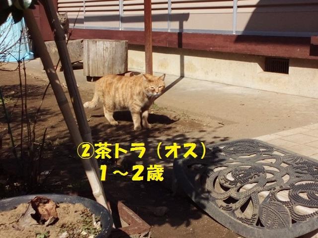 【里親さま募集】置いて行かれた猫8匹-その後-_f0242002_11543337.jpg