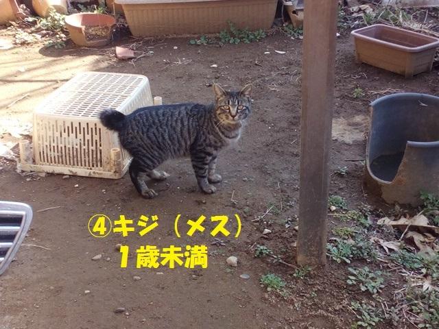 【里親さま募集】置いて行かれた猫8匹-その後-_f0242002_11544425.jpg