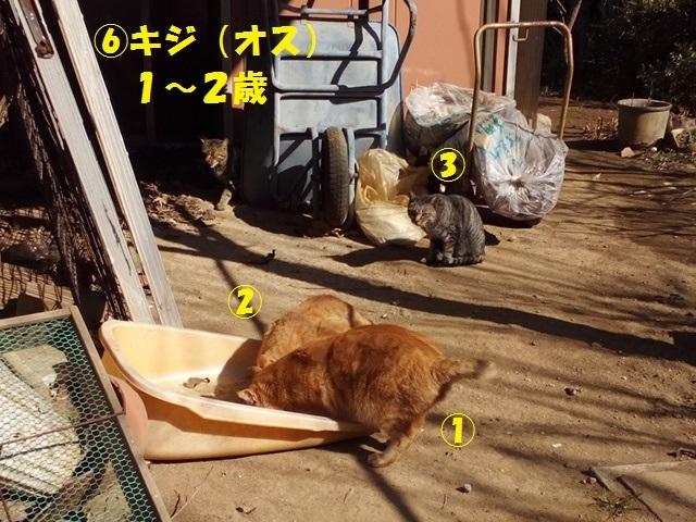 【里親さま募集】置いて行かれた猫8匹-その後-_f0242002_11550123.jpg