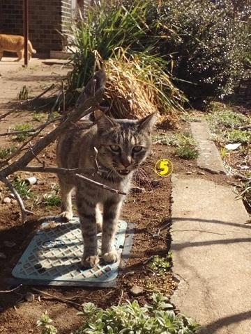 【里親さま募集】置いて行かれた猫8匹-その後-_f0242002_11553605.jpg