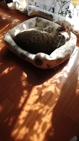 猫の日_a0122205_15562969.jpg