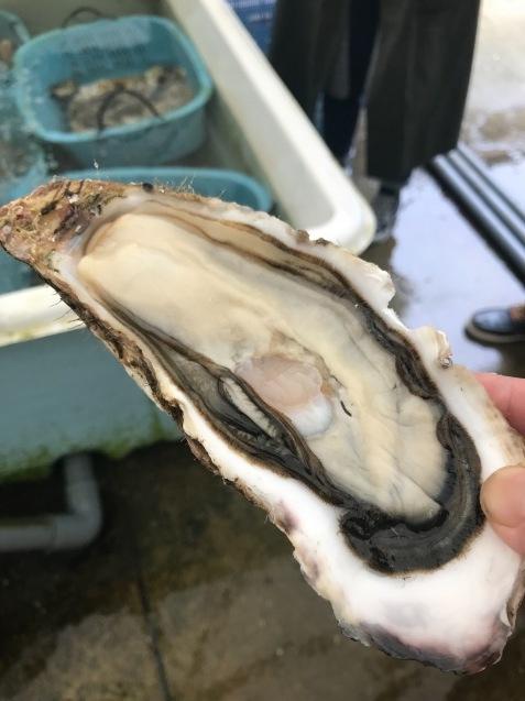 牡蠣を食べまくっていただく日_c0130206_22041162.jpeg