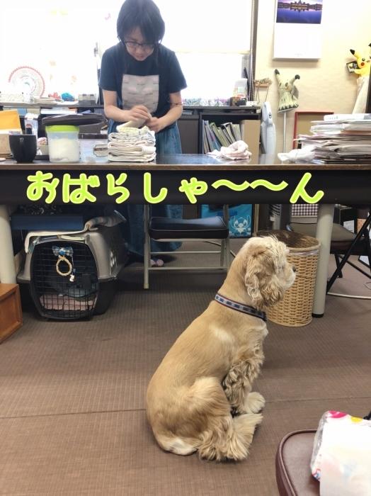 待つ犬。_b0067012_01194886.jpeg
