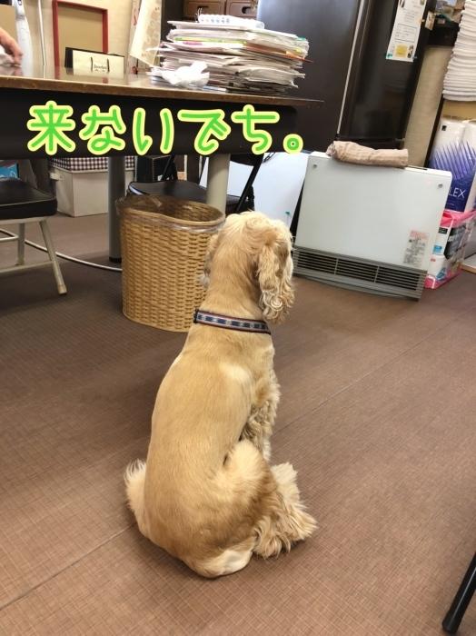 待つ犬。_b0067012_01221494.jpeg