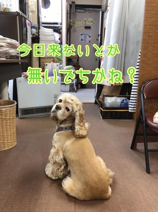 待つ犬。_b0067012_01241000.jpeg