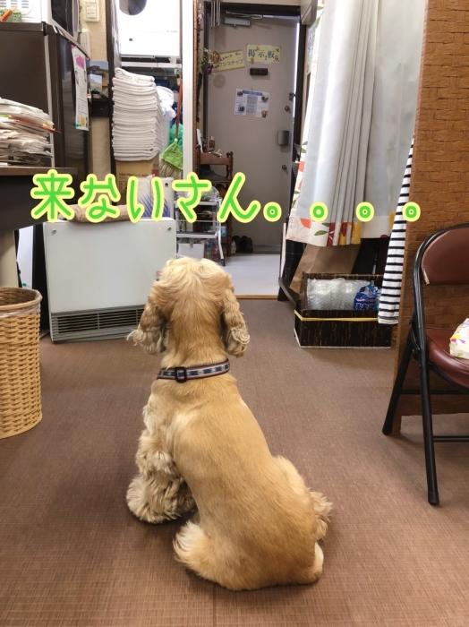 待つ犬。_b0067012_01260012.jpeg