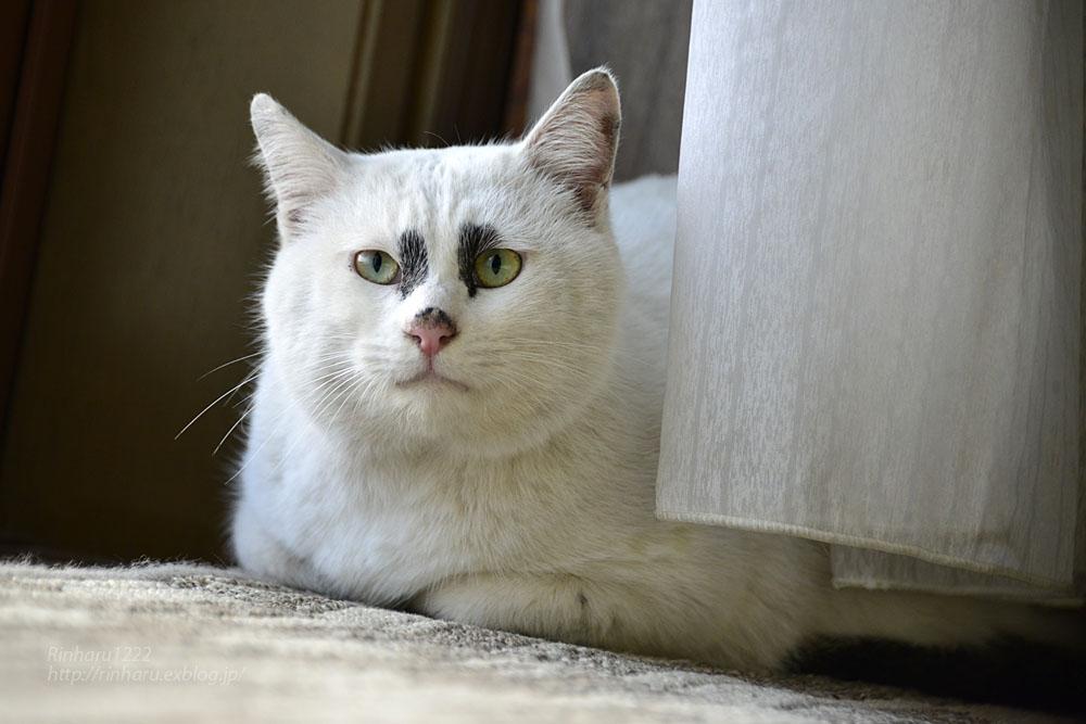 2018.12.2 我が家の猫☆くぅちゃん【Cat】_f0250322_20483423.jpg