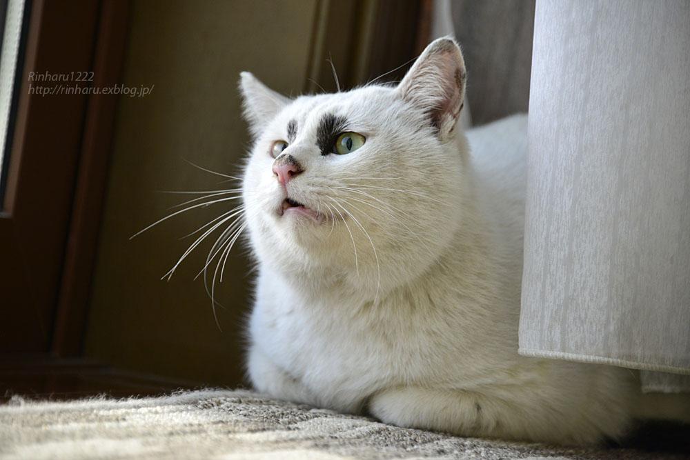 2018.12.2 我が家の猫☆くぅちゃん【Cat】_f0250322_20483942.jpg
