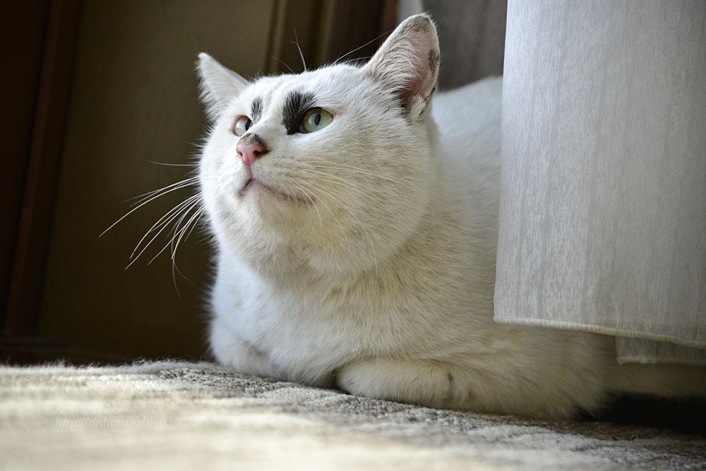 2018.12.2 我が家の猫☆くぅちゃん【Cat】_f0250322_20484558.jpg