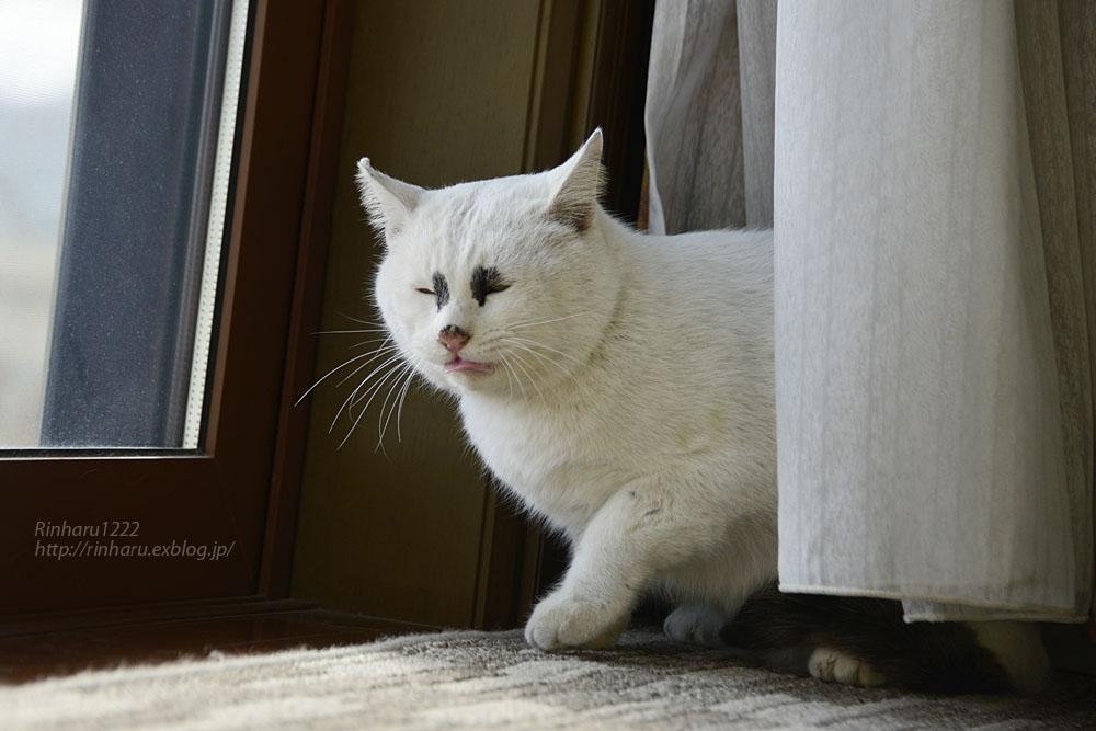 2018.12.2 我が家の猫☆くぅちゃん【Cat】_f0250322_20485014.jpg