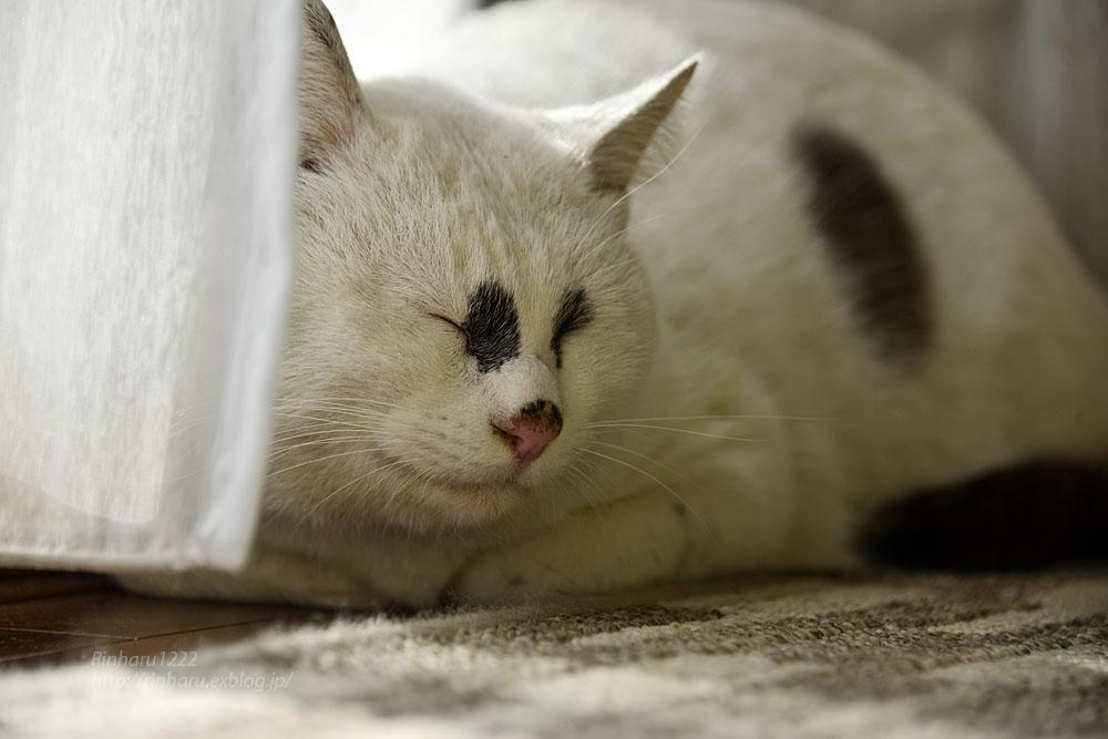 2018.12.2 我が家の猫☆くぅちゃん【Cat】_f0250322_20491587.jpg