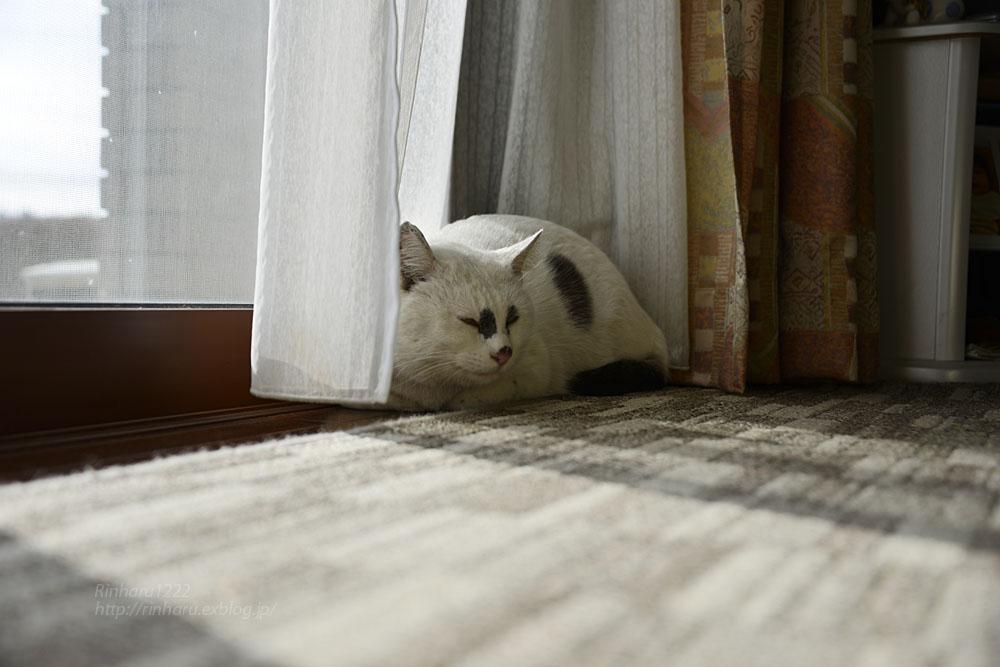2018.12.2 我が家の猫☆くぅちゃん【Cat】_f0250322_20492156.jpg